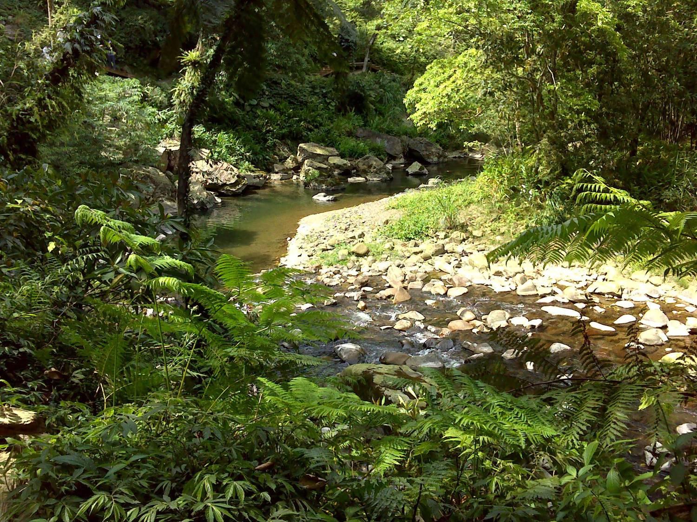 金瓜寮魚蕨步道部分路段可以親近溪流,與水同行。圖:新北市觀光旅遊網/翻攝