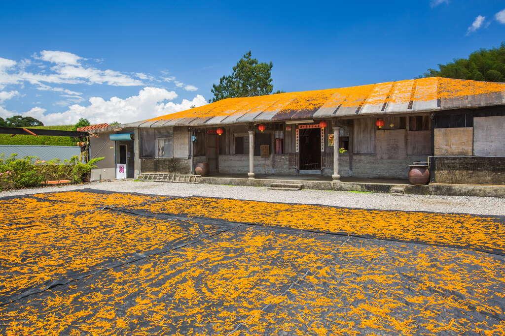 汪家古厝曬金針的畫面僅在金針花季才能看到,吸引許多攝影人拍攝。圖:花東縱谷國家風景區網站/翻攝