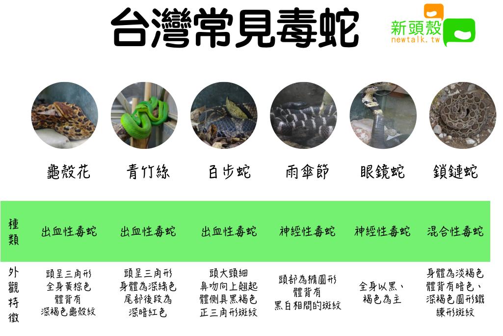 台灣常見毒蛇 圖:新頭殼/製表