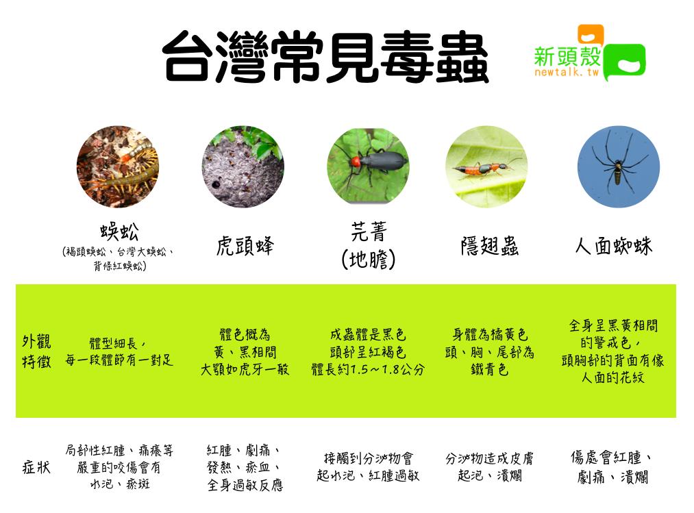 台灣常見毒蟲 圖:新頭殼/製表