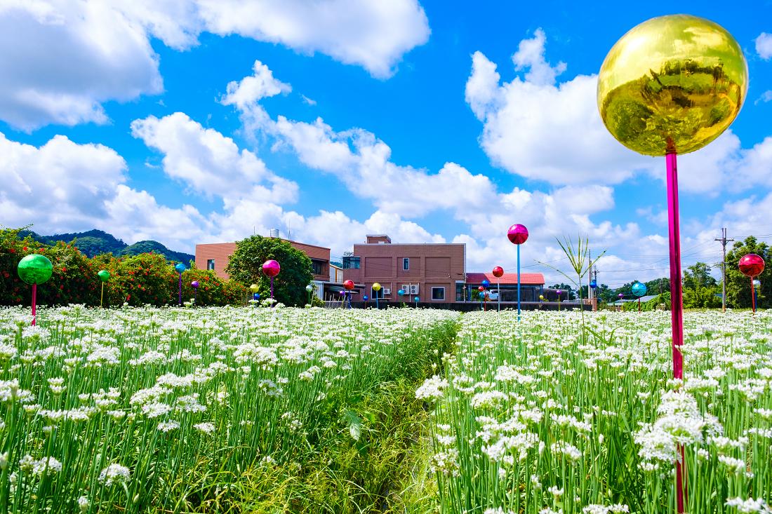1320巷的花田規模較小,立有七彩球狀裝置藝術。圖:謝佳真/攝