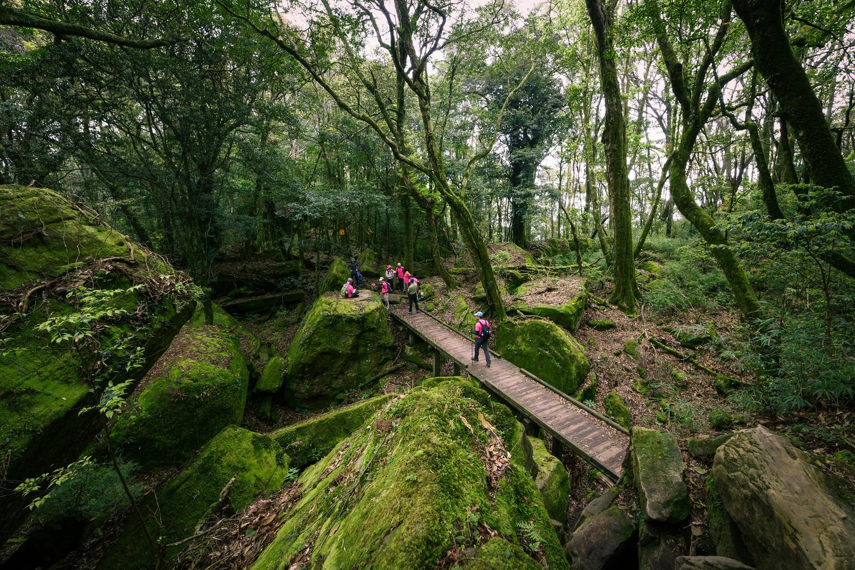 加里山有高大柳杉林和闊葉林相,景觀優美富變化。圖:謝佳真/攝