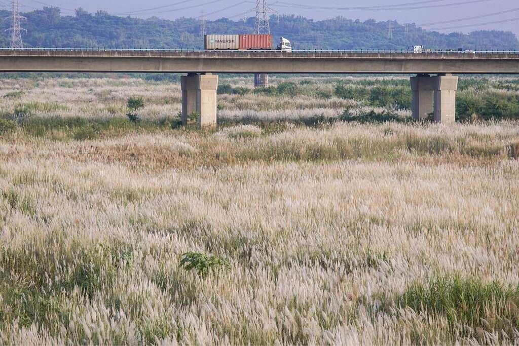 山海圳綠道善化段也可以騎自行車,邊賞秋天銀白世界。圖:翻攝自台南市觀旅局網站