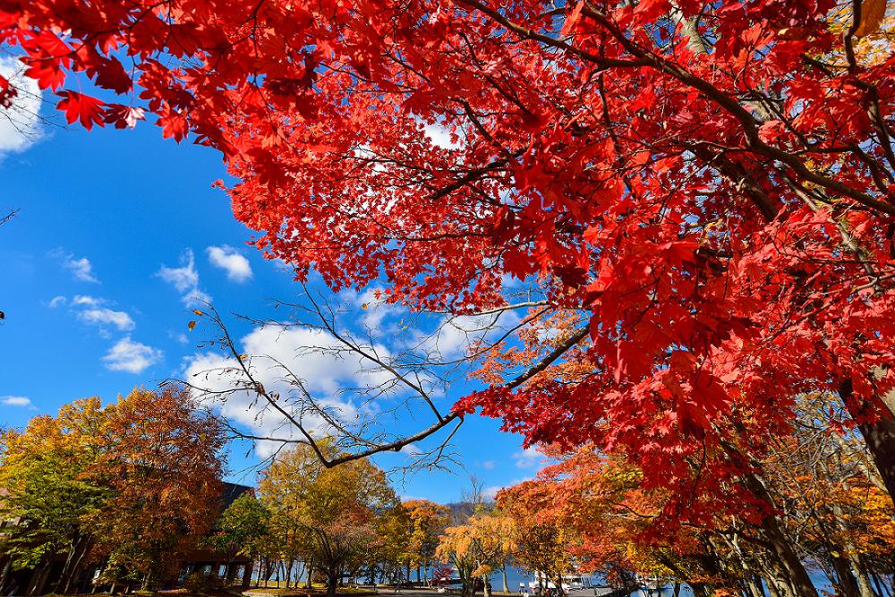 十和田湖周遭處處是美麗的楓景。圖:謝佳真/攝