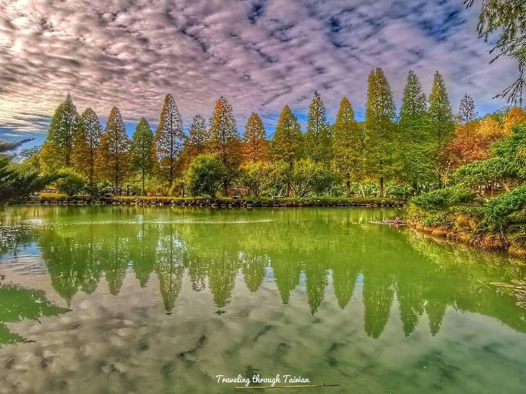 北埔六塘的落羽松是很經典的湖景,一排落羽松於水邊排開。圖:IG@subaristj/攝影授權