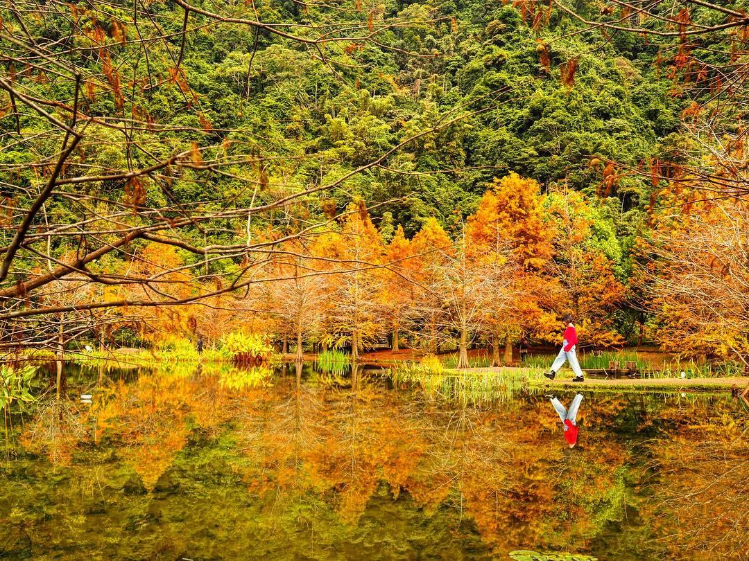 南庄雲水度假森林的池邊落羽松頗有幾分歐洲風情。圖:IG@_abby1126/攝影授權