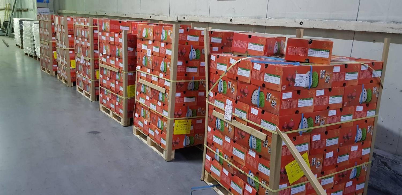 台東鳳梨釋迦今天運抵科威特進口商「新鮮蔬果公司」FFC的發貨倉庫。圖:科威特代表處