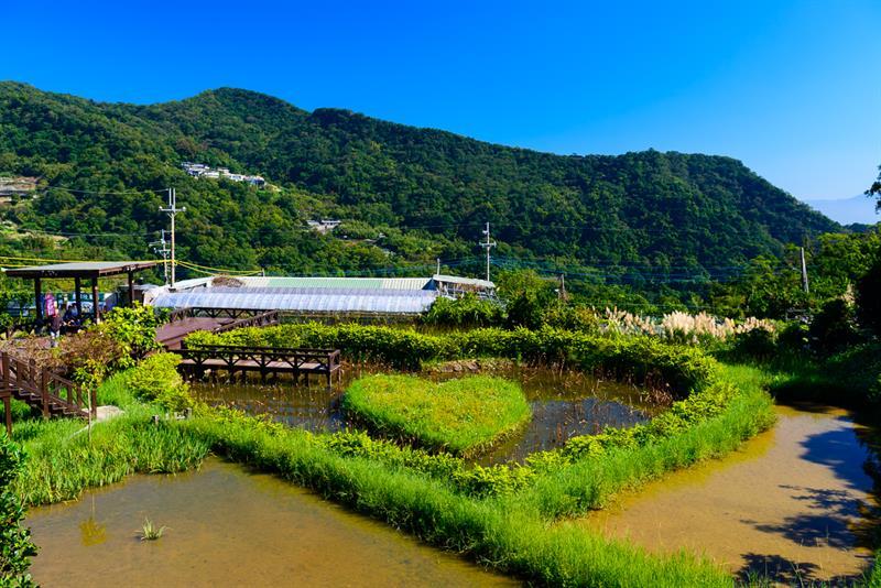 白石湖吊橋與草莓園相隔不遠,走路大約10分鐘就到。圖:翻攝自農業易遊網