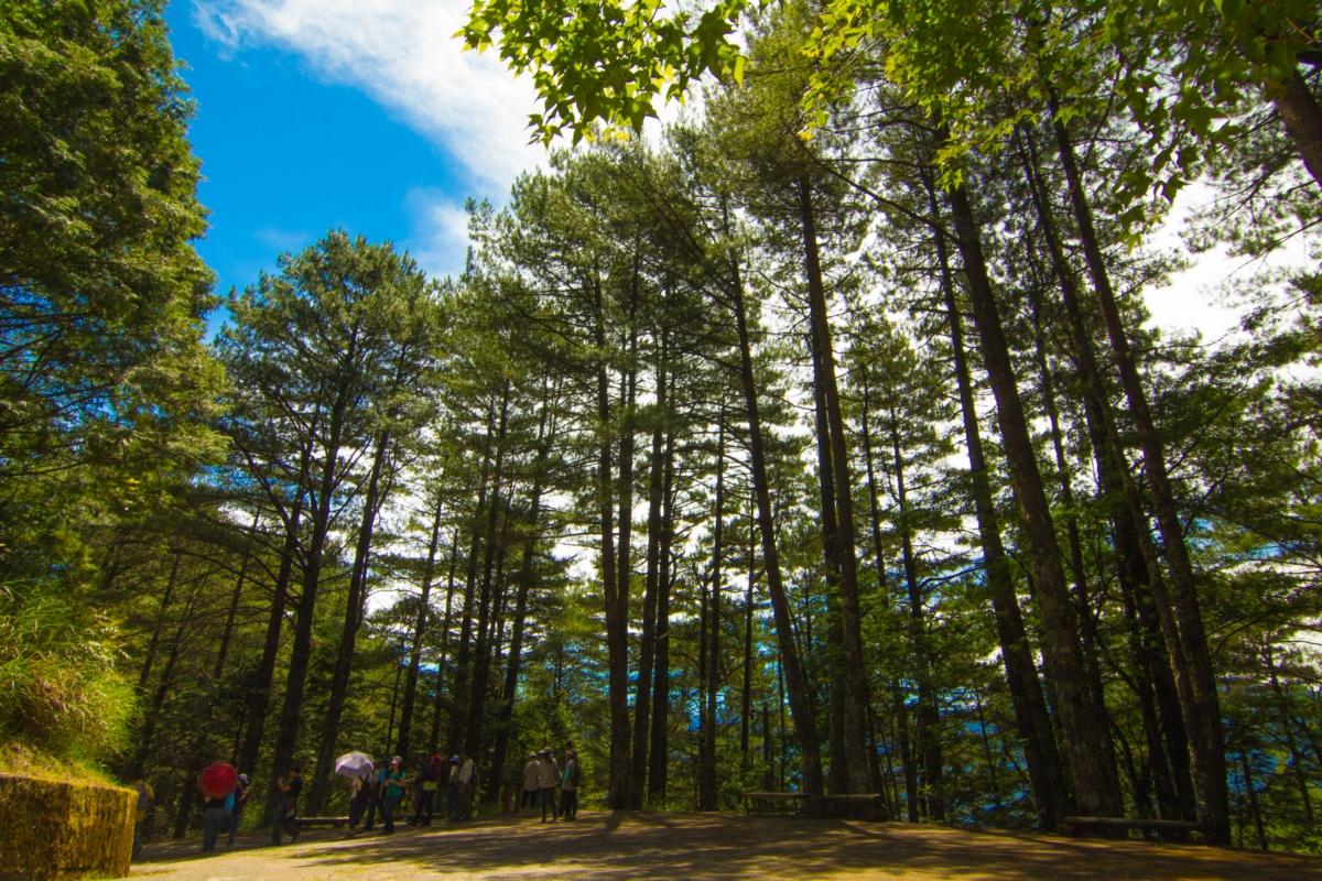大雪山擁有豐富的動物資源,東勢林管處特別推薦遊客來雪山神木步道走走。 圖:翻攝自山林悠遊網