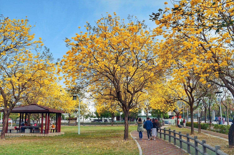 台中的廍子公園今年花況極佳,走在公園內可享受被花樹包圍的浪漫氣息。 圖:翻攝自大玩台中臉書