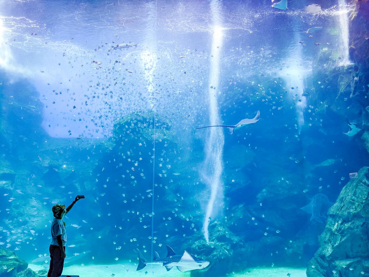 福爾摩沙區的大面玻璃牆儼然成了水族館最具代表性的標誌。 圖:謝佳真/攝