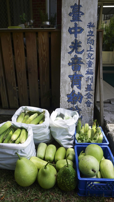 網銀基金會志工們栽種的有機無毒蔬果。