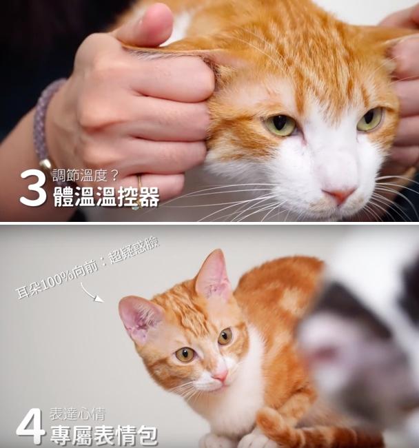 請「好味貓知識」是好味小姐 2018 年新展開的影片企劃,他們在影片中分享大大小小的養貓知識,破除迷思,也讓更多人知道如何與貓一同生活。照片來自於好味貓知識,討論貓耳朵的功能。圖:好味小姊/提供