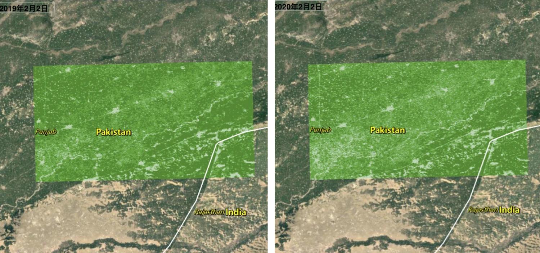 巴基斯坦北部旁遮普省植被茂密程度對照,2020年的深色區較去年同期少。 圖:翻攝自澎湃新聞