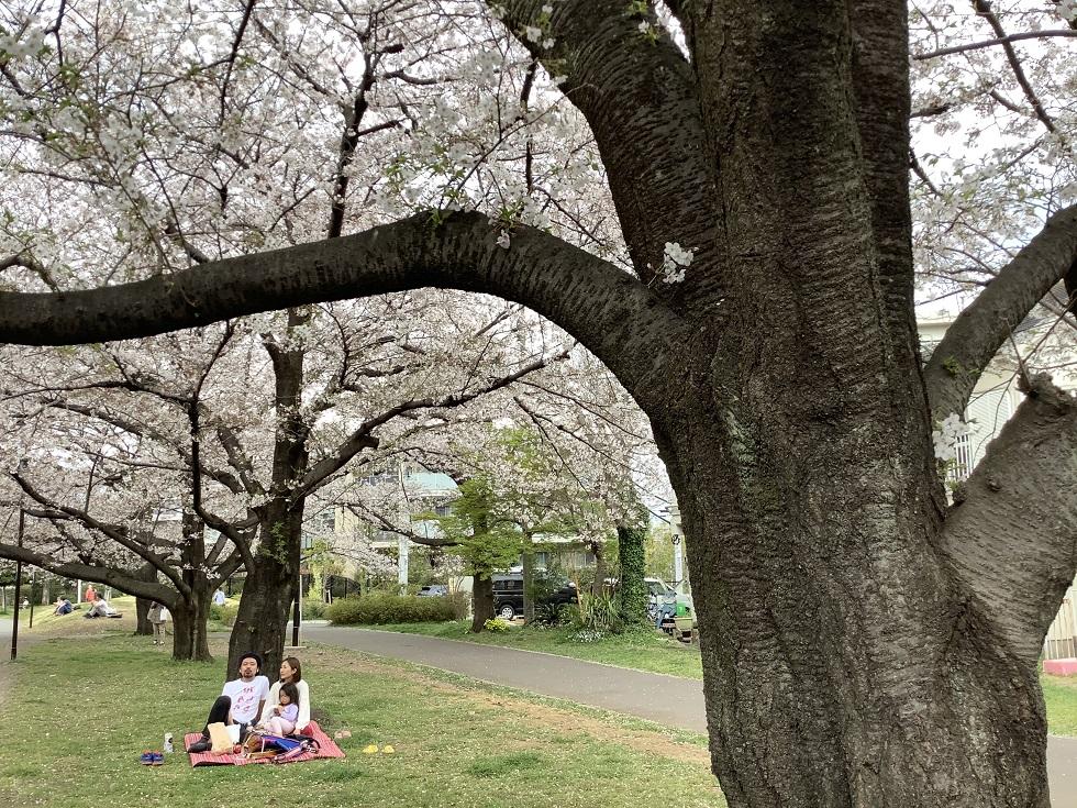 因為自肅,偌大的公園與櫻花美景只有少數人獨佔。 圖:劉黎兒攝影