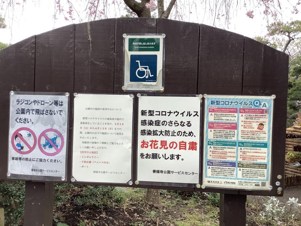 東京今年連賞櫻都不准,一切要自肅。 圖:劉黎兒攝影