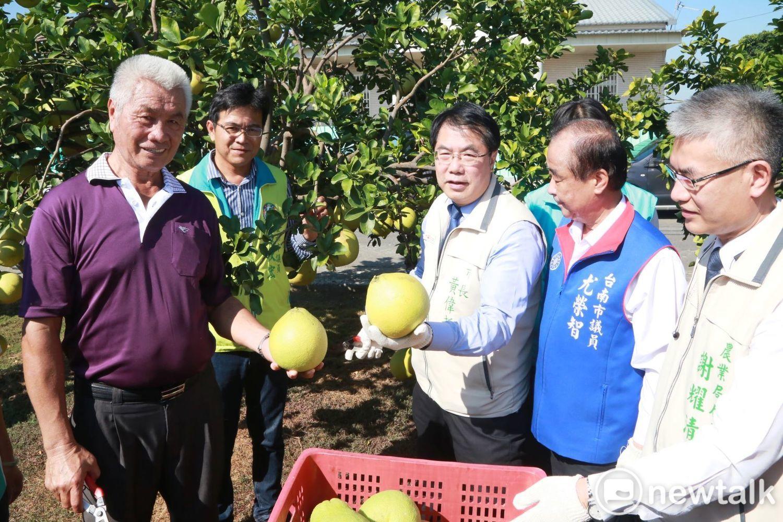 台南市長黃偉哲化身一日農夫,前往麻豆現採及大口品嘗香甜多汁的紅柚,向全國朋友推薦吃台南紅柚正是時侯。 圖:黃博郎/攝(資料照片)