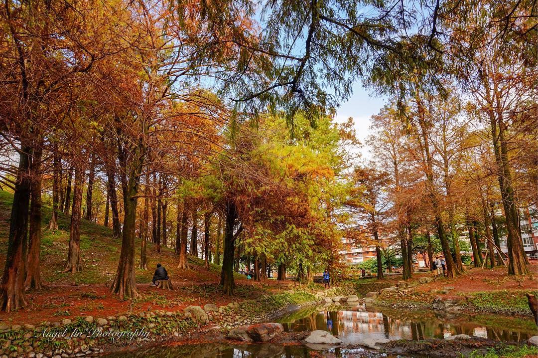 羅東運動公園清澈的水流映出披上紅黃薄紗的落羽松,是秋冬不可錯過的美景(資料照)。 圖:IG@angel_lin222/攝影授權