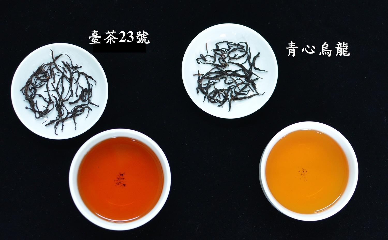 台茶23號成茶與茶湯。圖:農委會/提供