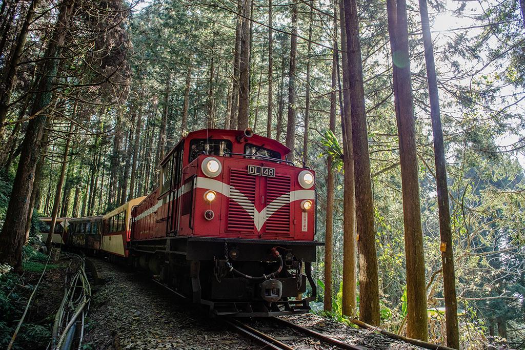 沐浴芬多精!國家森林館34條台灣森林遊程熱鬧登場