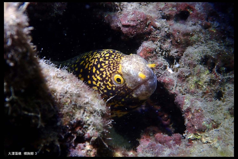 讀者投書》從江啟臣簽署支持保護桃園藻礁談起