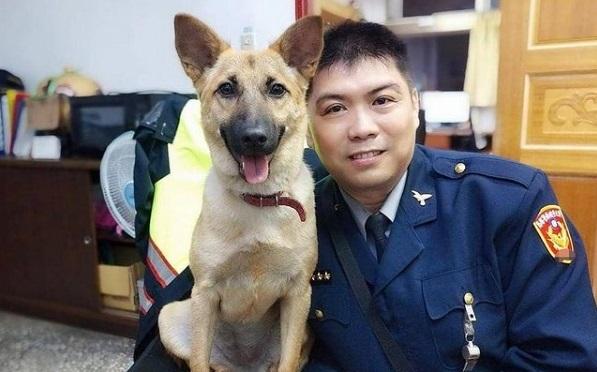 新北市第63隻機關犬「平安」成網紅 喜獲動保處頒身分證   社會  