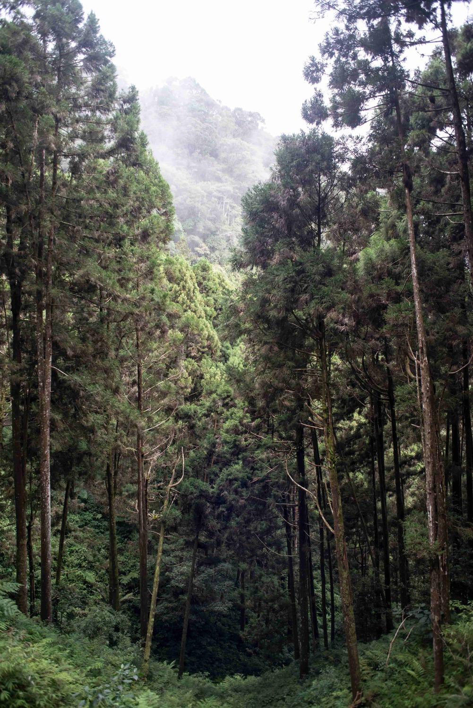 藤枝國家森林遊樂區林木蒼翠茂盛,微風吹拂宛如海濤,故又名「森濤」。圖:高雄市政府/提供