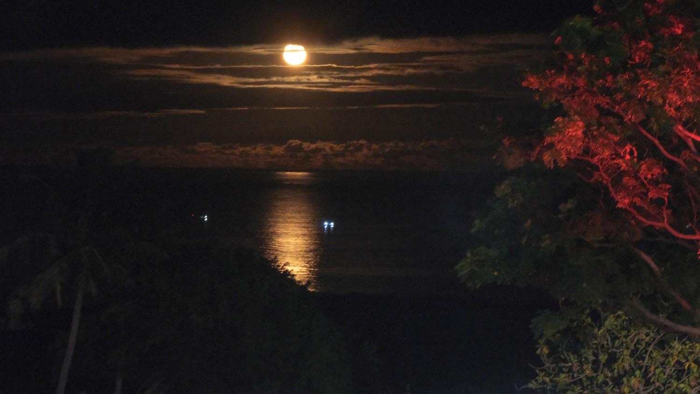2021東海岸大地藝術節的「月光‧海音樂會」改成線上直播。圖:東管處/提供